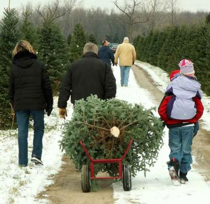 Family with fresh cut Christmas tree at the farm