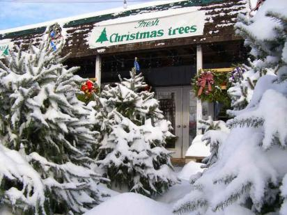 Store with Fresh Cut Christmas Trees in the Snow