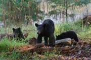 Bear Safety: Camping In Bear Country
