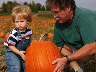 Father and Son Pumpkin Picking for Halloween