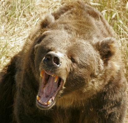 Scary Grizzly - Time for the Bear Pepper Spray
